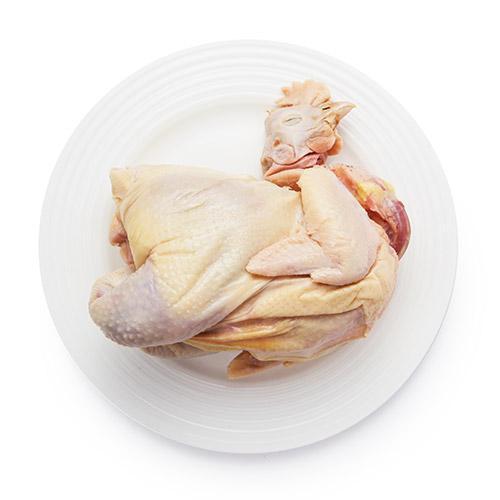 中华宫廷黄鸡品种